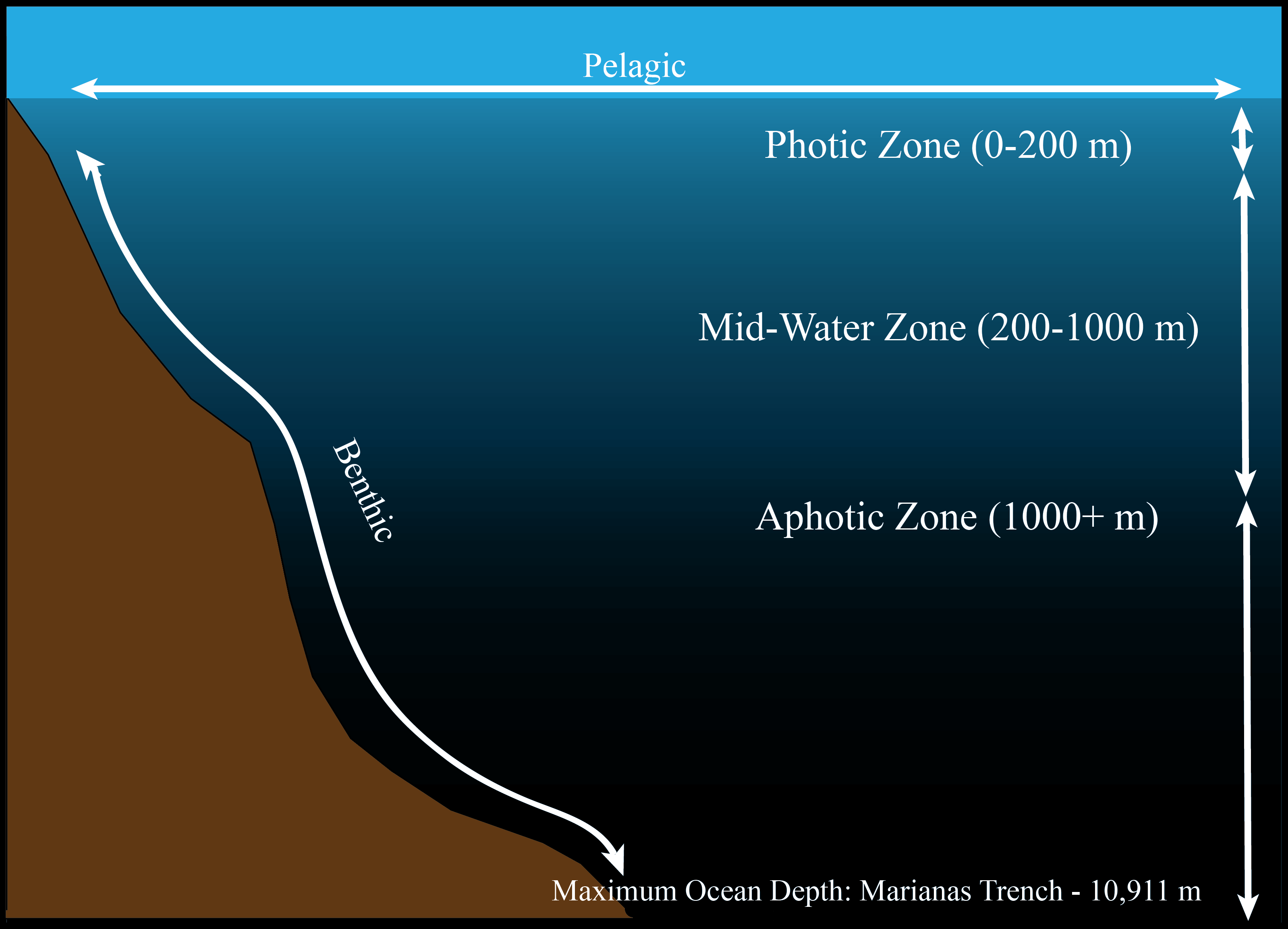 Inside the aphotic zone for Deep ocean floor definition